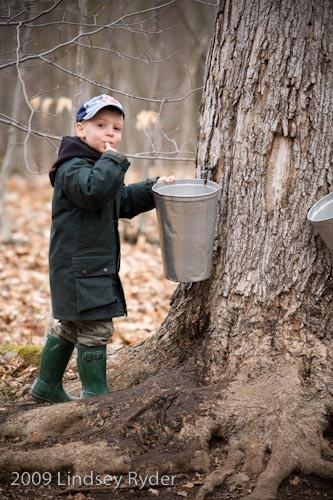 Testing the maple sap!